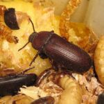 Il 54% degli italiani boccia l'utilizzo alimentare degli insetti, secondo Coldiretti